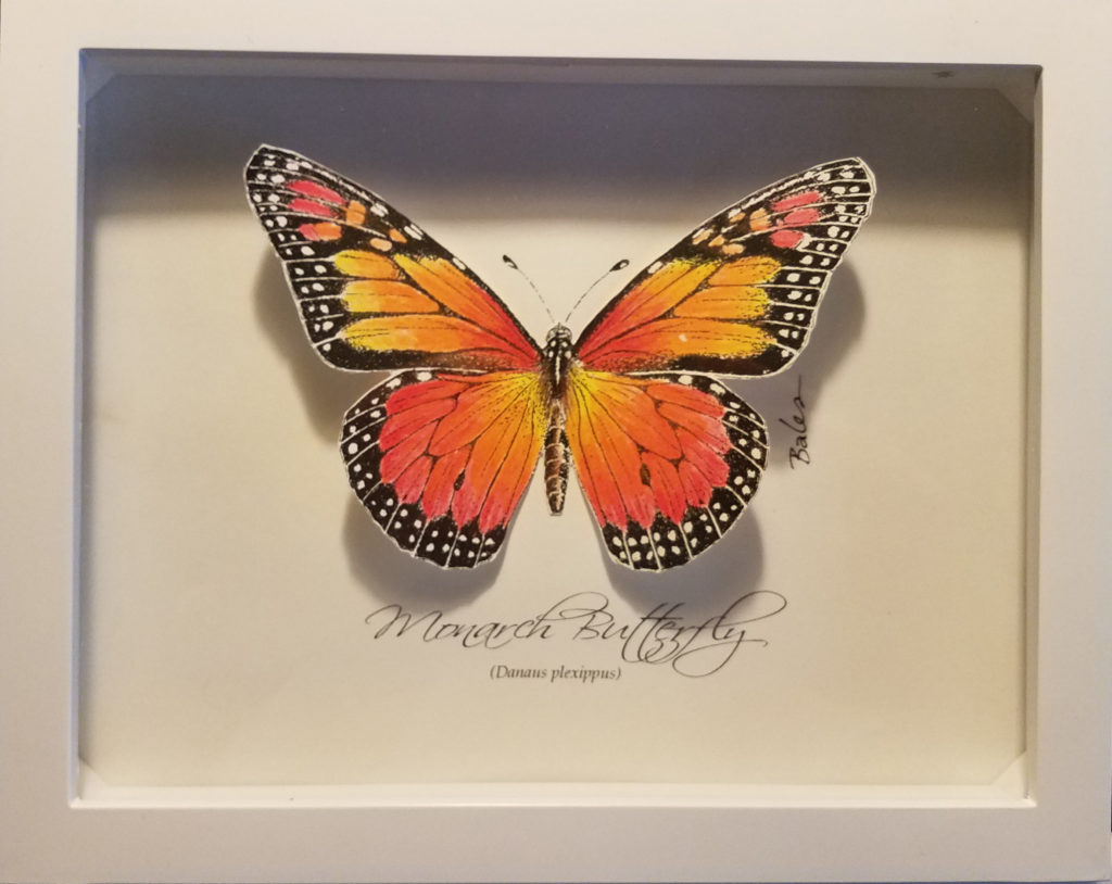 Image of Monarch butterfly shadowbox