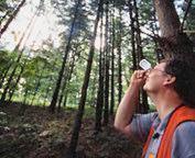 Tree Measuring