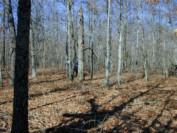Tree Species Study on Highland Rim Forest