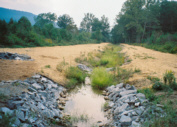 Re-vegetation